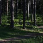 skidstavallen2012017